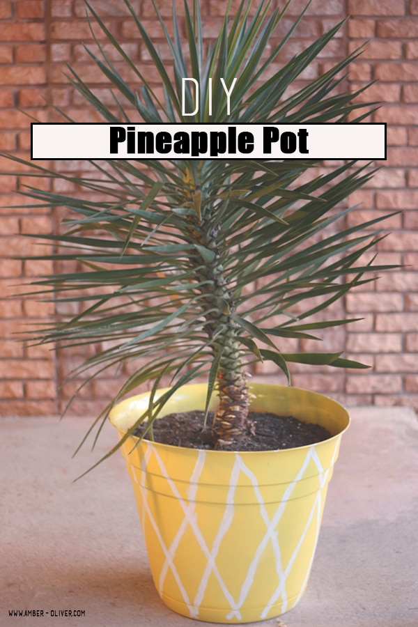 Pineapple pot amber oliver for How to plant a pineapple top in a pot
