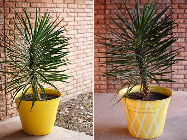 Pineapple-Planter-with-and-without-stripes