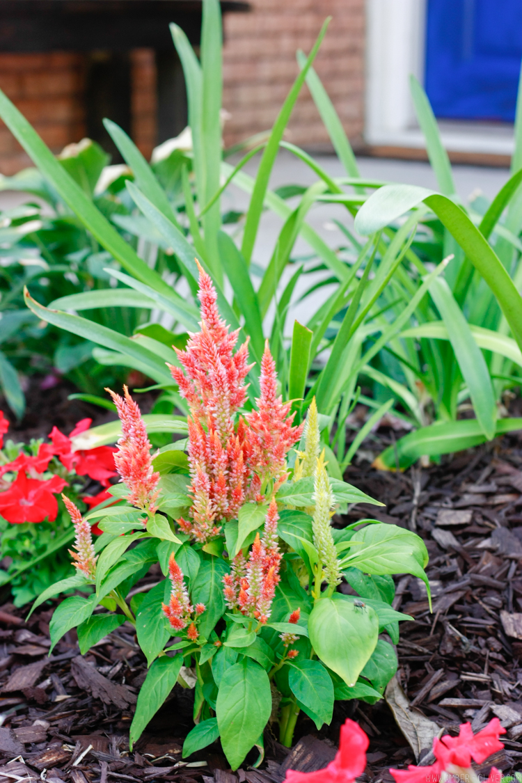 close up of flowers for curb appeal landscaping: simple curb appeal ideas