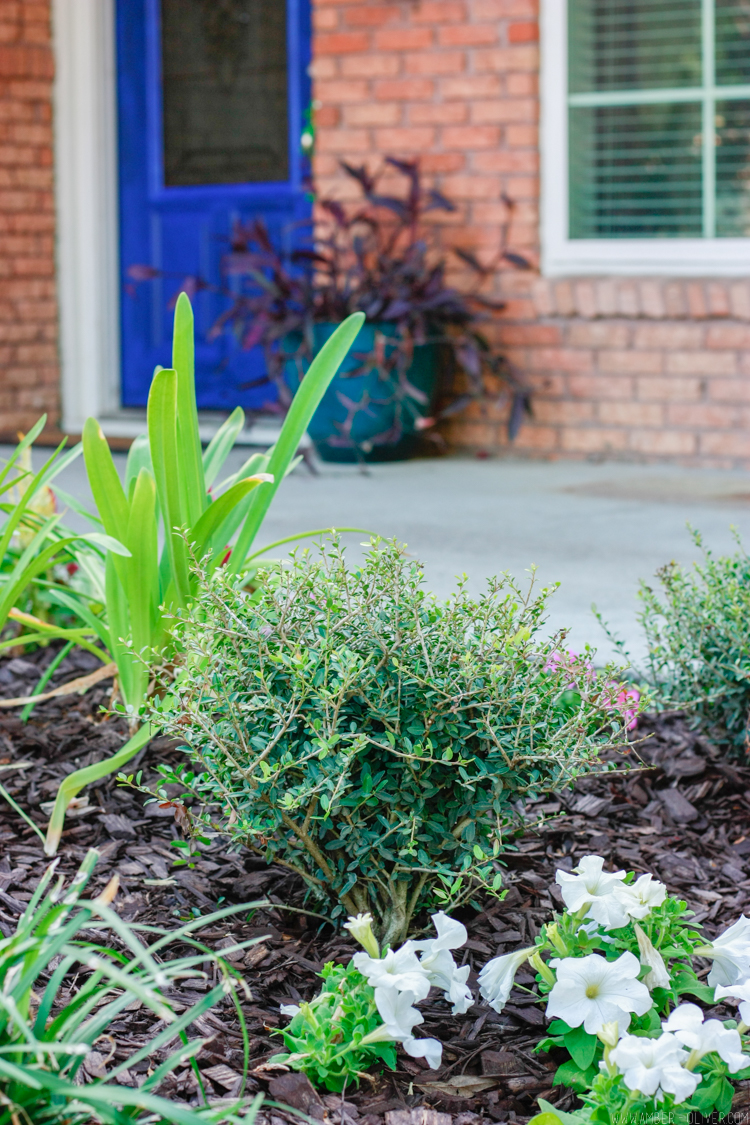 Curb Appeal Our Front Yard Makeover With Home Depot And