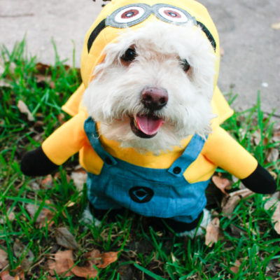 DIY Minion Costume – Make your own Minion Halloween costumes!
