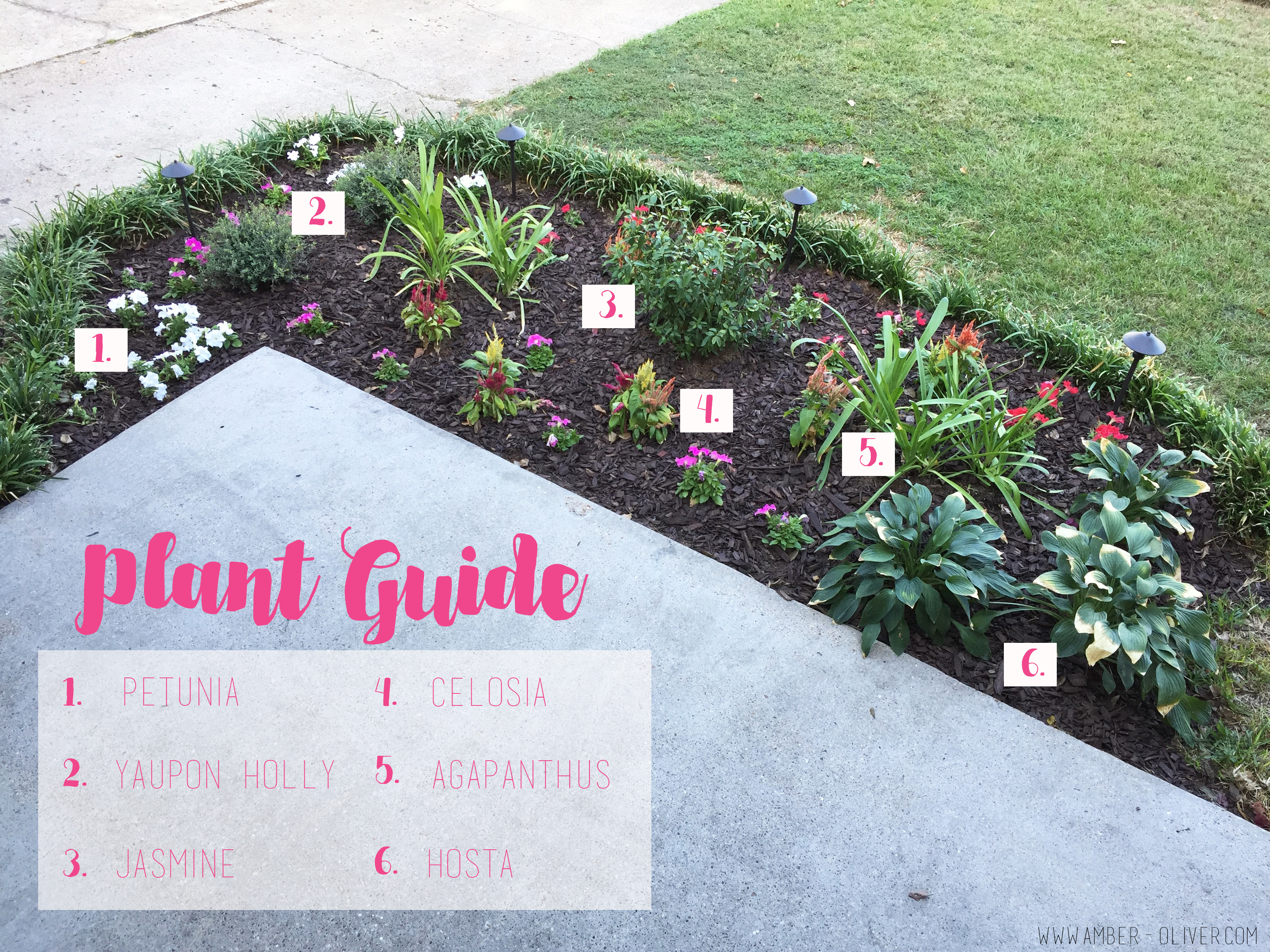 plant-guide-flowerbed-makeover curb appeal ideas