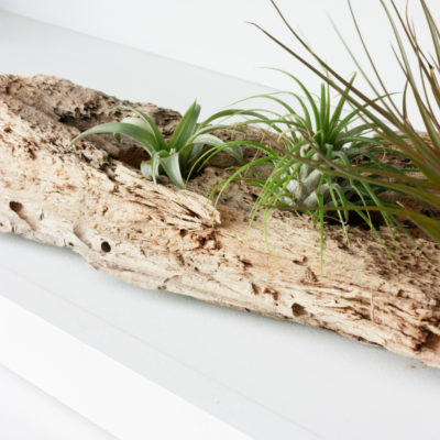 DIY Driftwood Air Plant Holder