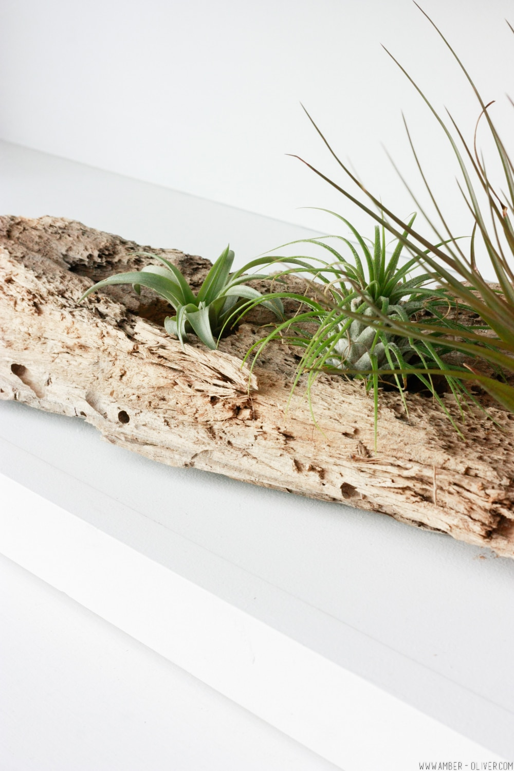 How To Make A Diy Driftwood Air Plant Holder Amber Oliver