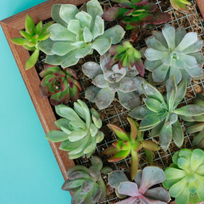 Vertical Garden – DIY Succulent Wall Planter