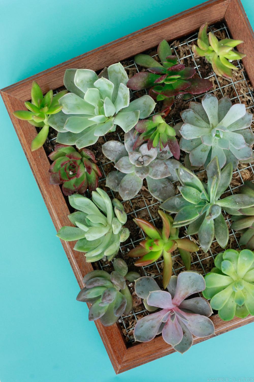 Vertical Garden Diy Succulent Wall Planter
