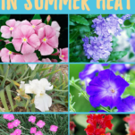Flowers that thrive in summer heat! What we planted and how it did in Houston, TX summer!