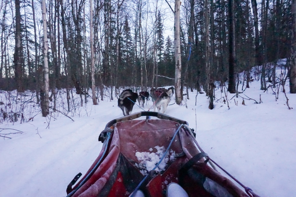 A recap of our Alaska winter vacation. Catch a glimpse of sights around Anchorage and Talkeetna, Alaska. I've included photos and video from our sled dog ride, views of Denali, and more!