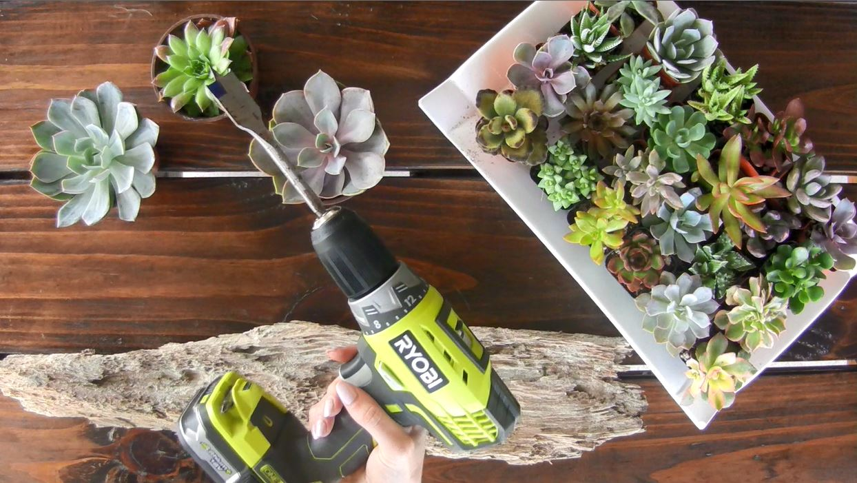 Making a DIY driftwood air plant holder with a drill