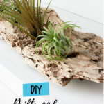 DIY Driftwood airplant holder - made with real driftwood!