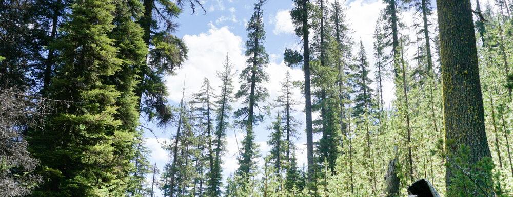 Oregon Road Trip from Portland to Bend- Tumulo Falls
