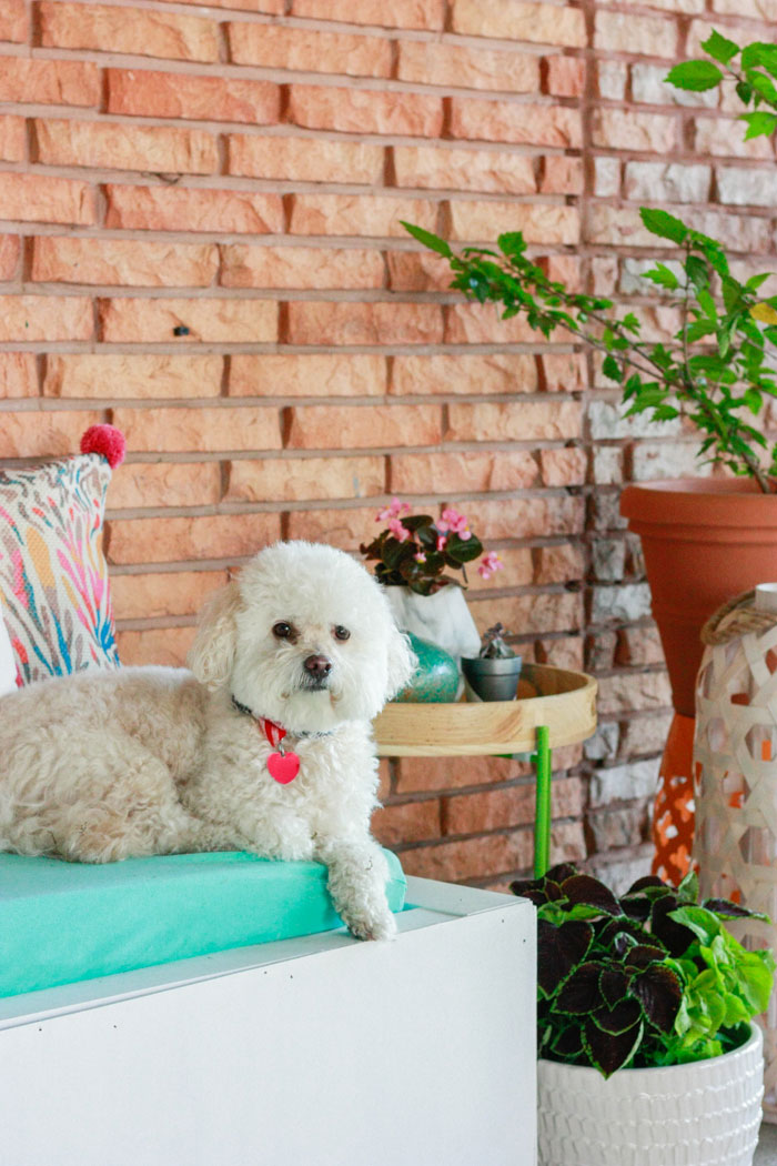 Barkley Oliver (TailsOfBarkley) on the decorated patio - patio decorating ideas with decor from At Home Stores