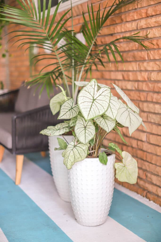 white pots with tropical plants on a colorful patio