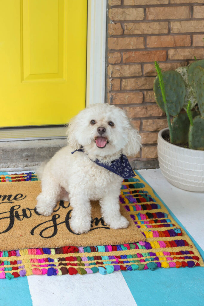 Tails of Barkley on a colorful rug in front of a yellow painted door