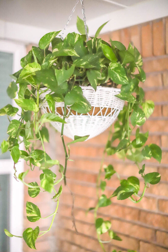 hanging plant on colorful patio