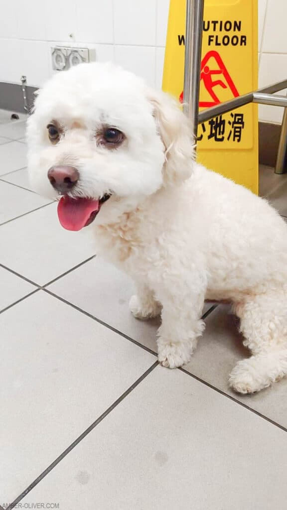 Tails of barkley arrives in Hong Kong!