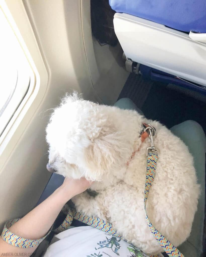 Tails of Barkley on a flight to LAX