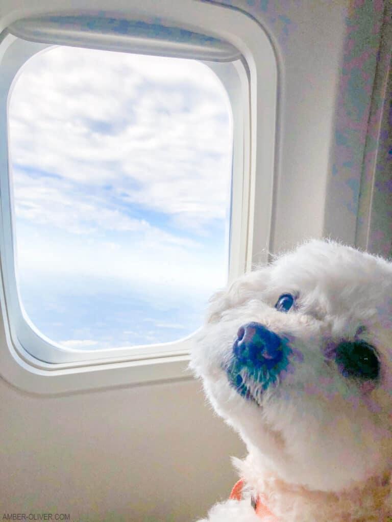 Tails of Barkley on a flight