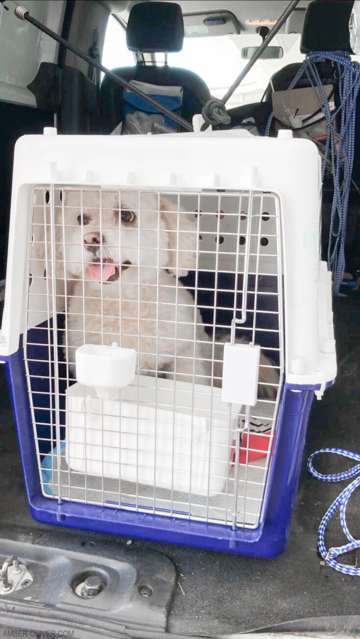 Tails of Barkley using an international pet shipping service