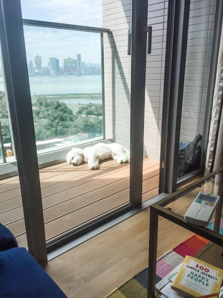 Tails of Barkley makes it to Macau, China