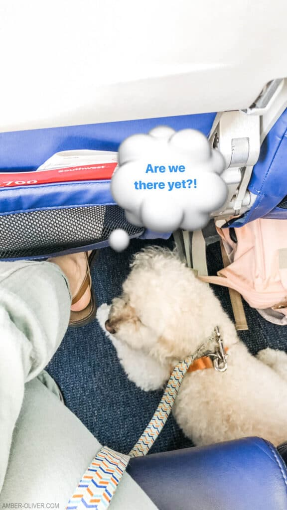 Tails of Barkley on an airplane