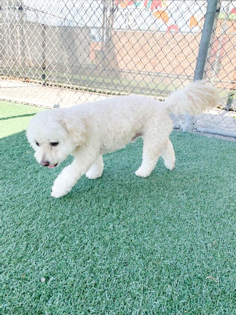 Tails of Barkley at LA Kennel Club