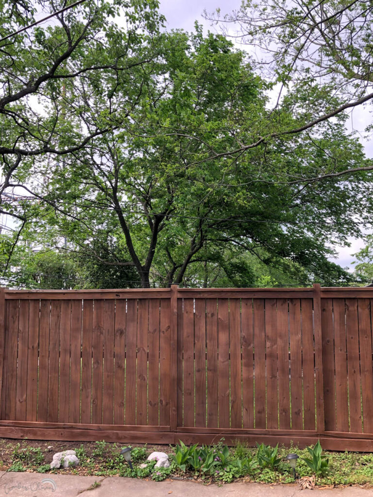 a newly stained wood fence